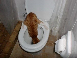never give up cat