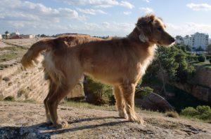 street dogs famagusta