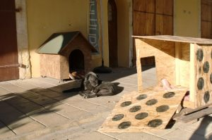 street dogs in famagusta