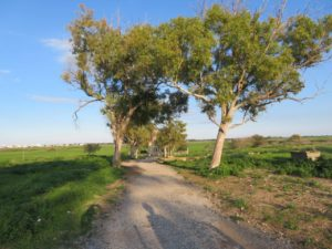road to the chapel of Saint Barnabas