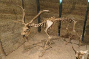 musée d'angoulême prehistorical animal