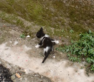 street cats in adana - kitten