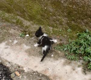 street cats in adana - kitten
