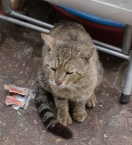 street cats in adana