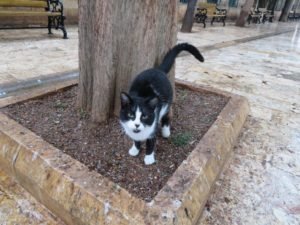 cats in sanliurfa