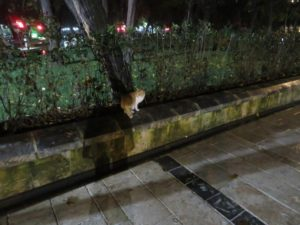 Cat in Balıklıgöl parc at night
