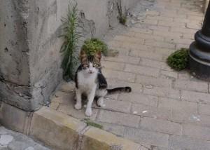 street cat in cyprus 1