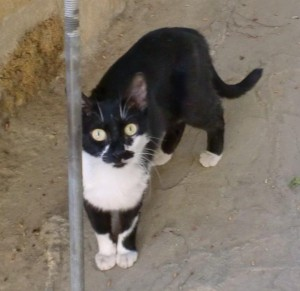 street cat in cyprus 2