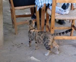 street cat in cyprus 3