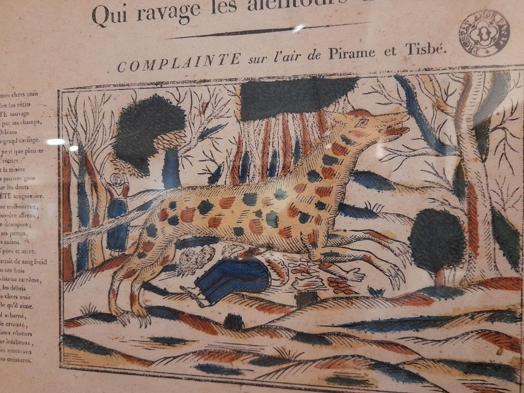 monster wild animal Musée d'Histoire et d'Archéologie in Orléans