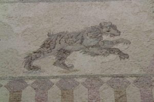 house of paphos Cyprus bear mosaic